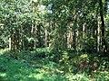 Hazel Hill Wood - geograph.org.uk - 50467.jpg