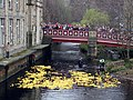 Hebden Bridge Duck Race - geograph.org.uk - 395893.jpg