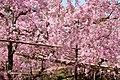 Heian Jingu Garden (3484417331).jpg