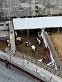 Helping bulls - Plaza Mexico.jpg