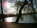 Herastrau park - panoramio.jpg