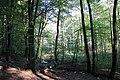 Herbstlicher Wald - panoramio (5).jpg