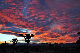 High Desert Twilight-3.jpg