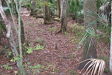 Hillsborough River State Park 14.jpg