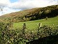 Hillside near Ty-mawr farm - geograph.org.uk - 601202.jpg