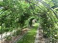 Hokkaido University botanical garden rose 2.JPG