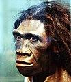 Homo.erectus.adult.female.smithsonian.timevanson.flickr.jpg