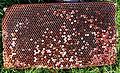 Honeycomb, honingraat.jpg