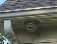 Hornets-nest-on-house-cropped.jpg