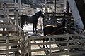 Horse Bathing - 6074.jpg