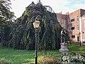 Hortus Medicus in Haarlem 06.jpg