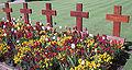 Howard Davis Park war cemetery Jersey b.jpg