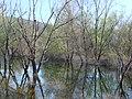Hutovo Blato . 28. 03. 2010 - panoramio - d.graso.jpg