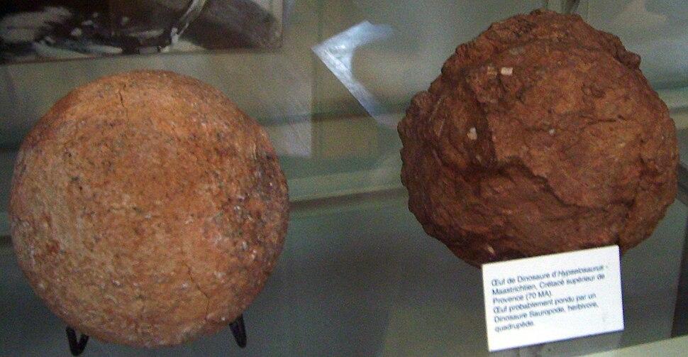 Hypselosaurus eggs