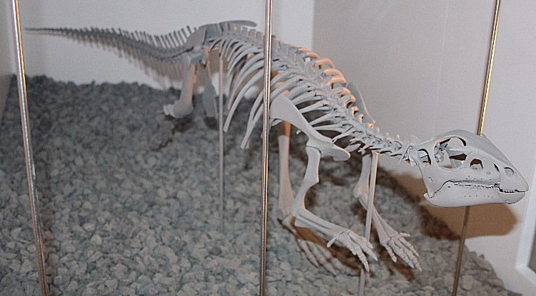 Hypsilophodon Melb Museum email
