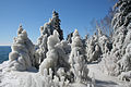 Ice covered trees on the shore of Lake Superior.jpg