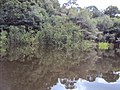 Igapó ilha do Severino Urucurituba Amazonas - جزيرة غمرت الغابات - 浸水林の島 - panoramio.jpg