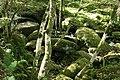 Ilsington, Becka Brook 2 - geograph.org.uk - 991438.jpg