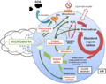 Impacts of microbial activity on cloud processes.webp
