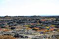 Imuruk Lava Beds (9513967176).jpg