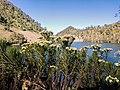 Indahnya Edelweis di Ranu Kumbolo, Gunung Semeru, Kabupaten Malang, Jawa Timur, 02082019 Pukul 1517.jpg