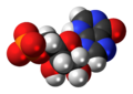 Inosine monophosphate anion 3D spacefill.png
