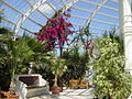 Interior of Sefton Park Palm House - geograph.org.uk - 164941.jpg