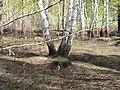 Irkutsk. Akademgorodok. Spring - panoramio (2).jpg