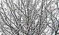 Jackson Pollock Tree - panoramio.jpg