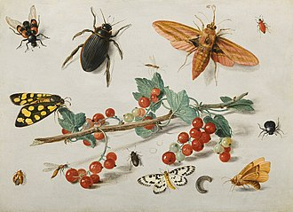 Jan van Kessel the Elder -  A sprig of redcurrants with an elephant hawk moth, a ladybird, a millipede and other insects