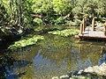 Japanese Garden Hobart Botanical 20171119-016.jpg