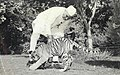 Jawaharlal Nehru with tiger cubs.jpg