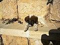 Jordan, Mount Nebo (Pup Mosses sleeping) (6).jpg