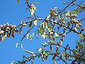 Kadina-almonds-0713.jpg