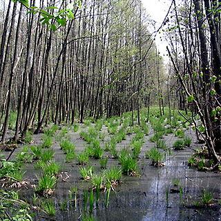 Kampinos Forest