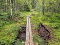 Kangasvuori nature trail - duckboard 2.jpg