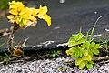 Katinger watt gruene insel mit eiderwatt 13.11.2012 14-00-28.jpg