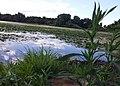 Keller Lake - Maplewood, MN - panoramio (1).jpg