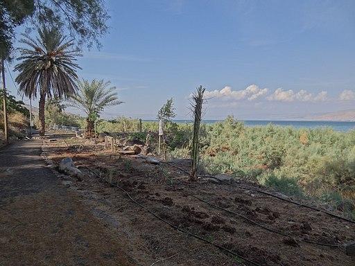Kinneret Trail (9)