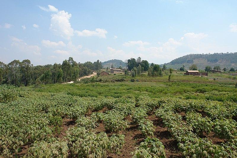 File:Kivumu, Gitarama (1) - panoramio.jpg