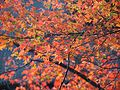 Kiyomizu-dera (24895391096).jpg