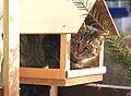 Kočka v krmítku 2.jpg