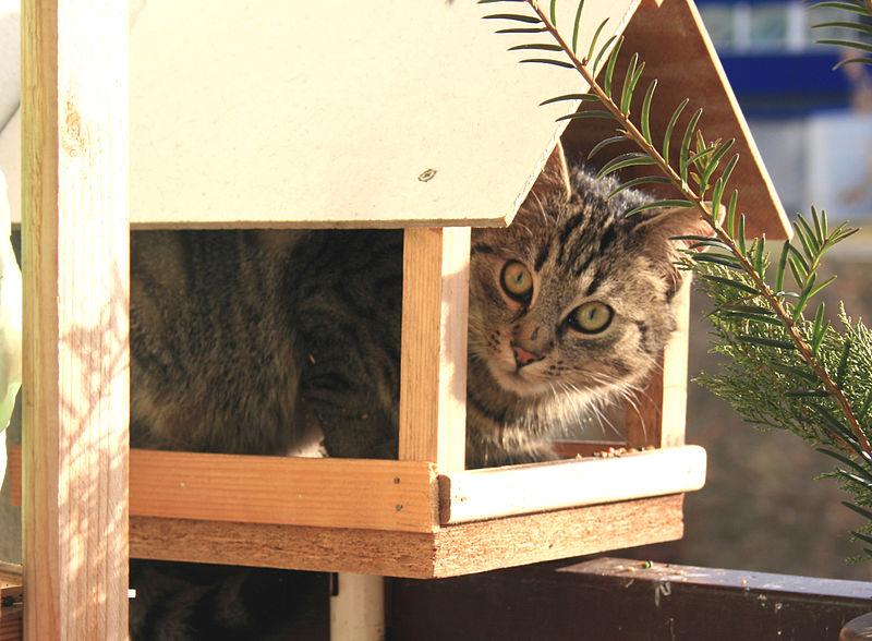 File:Kočka v krmítku 2.jpg