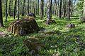 Koplipargi kivi. 7.jpg