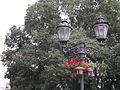Koprivić, spomenik prirode, Novi Sad.JPG