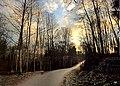 Kylmänojan kävely-pyörätiellä .Nokia - panoramio.jpg