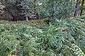 LSG Forst Rundshorn nahe Würmseeweg IMG 0154.jpg