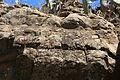 La Palma - El Paso - Barranco de Tenisque - Grabados rupestres de El Cementerio 19 ies.jpg