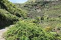 La Palma - San Andrés y Sauces - Calle Los Tilos 02 ies.jpg