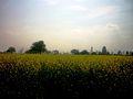 Landscape (Prade) - panoramio.jpg